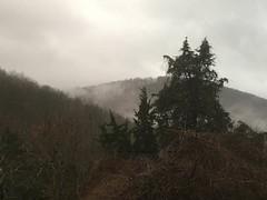 falling sky (GAWV) Tags: mountains mountain sunset fog graysky westvirginia appalachian appalachia sky keyser mineralcounty forest grass pasture winter clouds