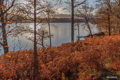 "Loch Lochy Autumn – a proverbial ""Pot of Gold."" (Scotland by NJC.) Tags: lakes lochs reservoirs waters meres tarns ponds pool lagoon lago 湖 jezero sø meer järvi lac see λίμνη 호수 innsjø jezioro озеро sunrise dawn daybreak sunup morning daylight شُروقُ الشَّمْس ""nascer do sol"" 日出 ""izlazak sunca"" ""východ slunce"" solopgang zonsopgang amanecer auringonnousu ""lever du soleil"" sonnenaufgang alba 日の出 autumn الـخَرِيف outono 秋天 jesen podzim efterår herfst otoño syksy automne herbst φθινόπωρο 秋 가을 høst jesień toamnă осень höst sonbahar fall lochlochy bunarkaig lochaber highlands scotland"