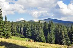 Trip to Mount Kukul-August-2018-22 (pavlo.malyshchak) Tags: travel mountains carpathians ukraine family summer vacation forest