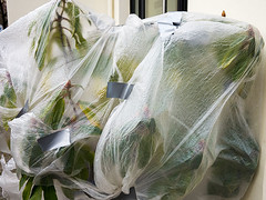20180221-002 (sulamith.sallmann) Tags: kunst pflanzen botanik eingehüllt kunststoff natur pflanze plastik plastikfolie sulamithsallmann eingepackt eingewickelt