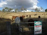 LOT 9 Mount Lindesay Highway, Josephville QLD