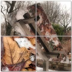 (Tölgyesi Kata) Tags: withcanonpowershota620 botanikuskert botanicalgarden füvészkert budapest macro winter tél snow mozaik mosaic leaf