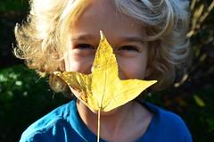 Everett And The Three-Pointed Leaf (Joe Shlabotnik) Tags: everett leaf justeverett november2018 2018 afsdxvrzoomnikkor18105mmf3556ged faved