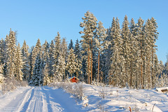 Swedish winter (Malte Kopfer Photography) Tags: winter vinter sweden sverige schweden wildnis natur nature snow schnee snö stuga varmland värmland scandinavia forest