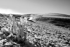 L'insolite dans la nature  -  The unusual in the nature (Philippe Haumesser (+ 7000 000 view)) Tags: nature paysage paysages landscape landscapes montagne montagnes mountain mountains hiver winter neige snow noiretblanc blackandwhite monochrome vosges alsace elsass france hautrhin 68 2018 nikond7000 nikon d7000 reflex