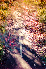 autumn road (N.sino) Tags: m9 summilux50mm fallenleaves autumnleaves road cyclingroad showakinenpark 自転車専用道路 秋 埋もれゆく道 枯葉 落ち葉 西日 夕日 昭和記念公園