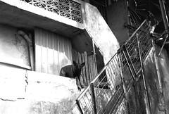 大溪_195 (Explored on Jan 15, 2019) (Taiwan's Riccardo) Tags: 2018 taiwan 135film negative bw fujifilmacros100 plustek8200i 桃園縣 大溪 voigtlanderbessar2c rangefider jupiterlens fixed 53mmf2 jupiter8m contaxrfmount russianlens