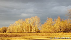 November 27, 2018 - Lit up landscape at the end of the day. (David Canfield)