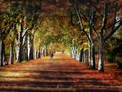 Paseo de los Castaños (Manuel Peña Jiménez) Tags: bosque casadecampo madrid paisaje otoño fujifilm xs1 fujifilmxs1