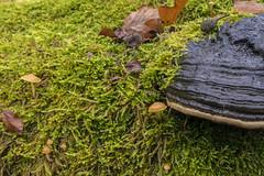 20181201_katzenkopf_0350 (doerrebachtaler) Tags: katzenkopf soonwald naturreservat buche buchenwald baumpilz nebel hunsrück seibersbach schanzerkopf hochsteinchen
