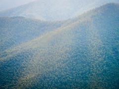 BambooForestB.jpg (Klaus Ressmann) Tags: omd em1 china forest klausressmann landscape mist moganshanmountain nature winter bamboo flcnat omdem1