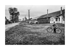 Home from the pasture (Paphylo) Tags: chernigovregion landscape reallife monochome leicacl bycicle countryside girl road ukraine cow blackandwhite figure monoart village countrylife document 400asa