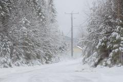 En forêt (Laurentian Park / Parc des Laurentides) (BLEUnord) Tags: forêt forest arbres trees conifères neige snow chemin road hiver winter laurentides laurentians parc park