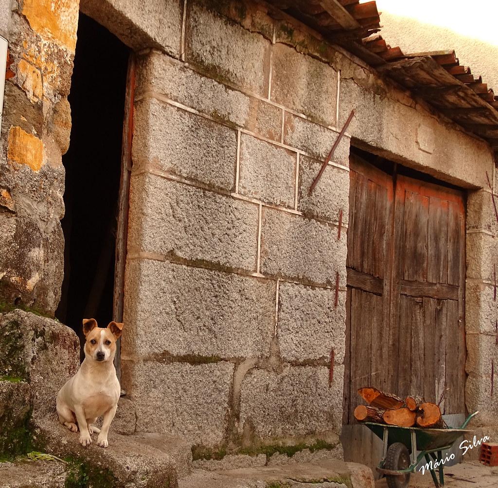 Águas Frias (Chaves) - ... o cão à porta, guardando os seus domínios e o carrinho de mão cheio de lenha, que o tempo está frio ...
