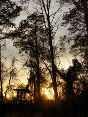 Early Sunset. (dccradio) Tags: lumberton nc northcarolina robesoncounty outdoors outdoor outside nature natural backyard march thursday thursdayevening evening goodevening nikon coolpix l340 bridgecamera sun settingsun sunset branch branches tree trees treebranch treebranches treelimb treelimbs woods wooded forest silhouette wood sky eveningsky