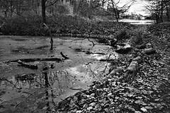 Peto jezero (roksoslav) Tags: zagreb croatia 2019 nikon z6 nikkorz2470mmf4s maksimir lake jezero zima winter