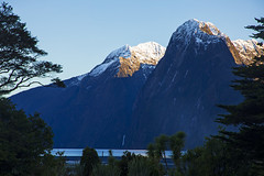 Juxtaposition (Matt Champlin) Tags: tgif friday newzealand travel exotic amazing life nature outdoors hike hiking milfordsound milford snow zealand incredible peaceful trees forest mountains fjords fjordslands nationalpark canon 2018 world