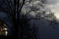 bright spot tree house (fdfotografie) Tags: tree house baum bäume haus ast äste stamm zweige kahl ausschnitt flora pflanze silhouette himmel wolke schwarz dunkel hell grau beige architektur muster struktur outdoor tageslicht dslr farbfoto querformat d7500 expressiv serie bright