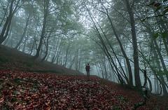 ALTUBE zarra 10 (juan luis olaeta) Tags: paisajes landscape forest bosque basoa pagoa hayedo fog foggy fujifilmxpro1 nieblas laiñoa niebla photoshop lightroom natura tree
