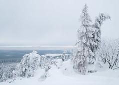 IMG_1380.jpg (niklasdd) Tags: schnee deutschland winter europa kälte germany weis snow bäume trees eis oremountains flickr erzgebirge cold saxony sachsen altenberg europe 9jähriges ice