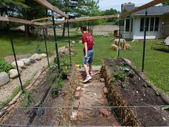 P1080771 (LPompey) Tags: garden strawbale gardening strawbalegarden