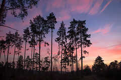 Think Pink! (music_man800) Tags: blackheath heath common nature reserve surrey hills aonb area outstanding natural beauty uk united kingdom guildford outdoors outside walk hike sandy lighting spectacular pretty beautiful sunset sun set sunny evening dusk late afternoon nightfall sky colour color colourful pink blue yellow orange tree trees pines forest wood woodland habitat silhouette shapes contrast shadow canon 700d adobe lightroom creative cloud edit photography arty artistic scene landscape