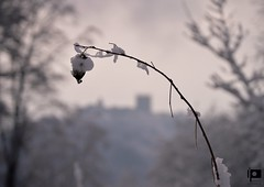 Ain't no sunshine when she's gone (Ivica Pavičić) Tags: winter macro medvedgrad medvednica snow