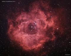 The Rosette Nebula - Caldwell 49 (Ralph Smyth) Tags: nebula rosette monoceros space ngc ngc2244 zwo rosettenebula caldwell astrometrydotnet:id=nova3193926 astrometrydotnet:status=solved
