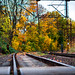 autumn on the railway.jpg