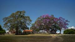 Spotlight on old farm (Petra Ries Images) Tags: fzuiko32mmf17 farm oldbuilding jakaranda trees bäume altegebäude bauernhaus verlassen light licht blüten blooming australia australien queensland