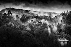 Faramello (Noel F.) Tags: sony a7r a7rii ii fe 100400 gm teo galiza galicia faramello bascuas lampai neboa fog