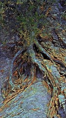 Dead Man Walking (lindyginn) Tags: photo ginn finger painting dreams ethereal surreal trees roots browns plants vegetation outdoor heavenly creature man walking dead