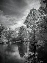 Portage Creek in Milham Park (bill.d) Tags: 590nm kalamazoocounty michigan milhampark portagecreek us unitedstates blackandwhite infrared kalamazoo park reflection summer tree