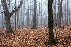 Of Secret Grounds (John Westrock) Tags: forest trees nature fog foggy mysterious wisconsin kettlemoraine midwest canoneos5dmarkiii canonef2470mmf28lusm
