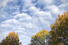 Treetops Morning Sun (Modkuse) Tags: sky clouds skyscape autumn fall fallcolors trees nature natural fujifilm fujifilmxt2 xt2 xf1855mmf284rlmois fujinon fujinonxf1855mmf284rlmois