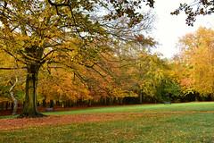Bostall Heath (John A King) Tags: autumn colour bostal heath woods