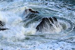 IMG_4894 (monika.carrie) Tags: monikacarrie wildlife scotland
