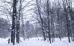 Snowy morning in the neighborhood (Scottb211) Tags: gaylord gaylordmi northernmichigan upnorth winter polarvortex