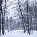 Snowy morning in the neighborhood