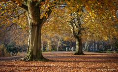 Herfst in Clingendael (Pieter Musterd) Tags: herfst autumn clingendael landgoed park pietermusterd musterd canon pmusterdziggonl nederland holland nl canon5dmarkii canon5d denhaag 'sgravenhage thehague lahaye