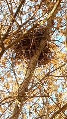 20181118_194959 (krys_q) Tags: zoo3450 november182018 clearfield ut fall2018 image4 wsu