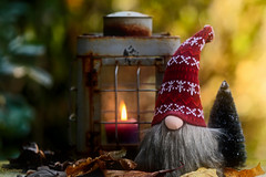 Hej, you're way to early :-) (eleni m) Tags: tomte garden tooearly november lantern candle burning xmastree nose beard autumn leaves dof bokeh scandinavia canon flame