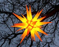 Herrnhuter Stern / Moravian Star (katrinchen59) Tags: star herrnhuterstern moravianstar decoration branches holidaydecoration christmastime stern weihnachtstern weihnachtsdekoration äste baum kerstster kerstversiering boom takken kersttijd weihnachtszeit