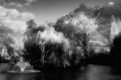 * (donvucl) Tags: london hackney clissoldpark blurredandsoftened bw blackandwhite landscape sky trees fountain pond fujixt3 donvucl