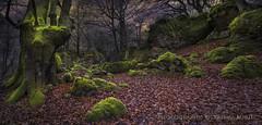 Otoño. Luces y sombras (Xálima Miriel) Tags: hayas opakua opacua otoño xálima