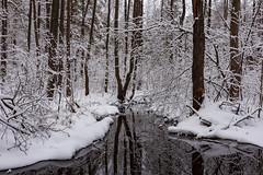 River Shitka (gubanov77) Tags: river nature winter december water petushinskiyraion vladimiroblast russia pokrov