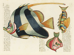 Colourful and surreal illustrations of fishes found in Moluccas (Indonesia) and the East Indies by Louis Renard (1678 -1746) from Histoire naturelle des plus rares curiositez de la mer des Indes (1754). (Free Public Domain Illustrations by rawpixel) Tags: ancient animals aqua aquatic artistic artwork asian collection creativecommon0 creativecommons0 design drawing drawn fish hand histoirenaturelledesplusrarescuriositezdelamerdesindes illustration indonesia isolated life louisrenard marine moluccas nature ocean renard sea set sketching southeastasia style vintage