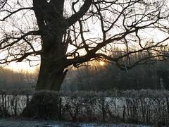 Baby, it's cold outside (ART NAHPRO) Tags: winter sussex rural england lane tree hoar frost morning sun rise