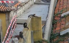 Cats of Porto (IX) (Elisa1880) Tags: cat cats katten kat poes porto portugal animal pet dier huisdier