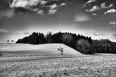 Baum vor dem Hügel (Helmut Reichelt) Tags: bw sw hügel baum wald felder wolken schwaigwall geretsried bayern bavaria deutschland germany winter januar leica leicam typ240 captureone12 silverefexpro2 leicasummilux50mmf14asph